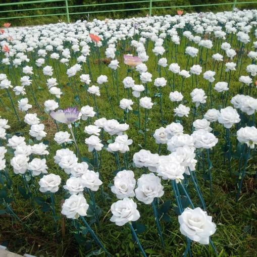 16000 Artifical-LED powered blossoms of Lintaon Peak