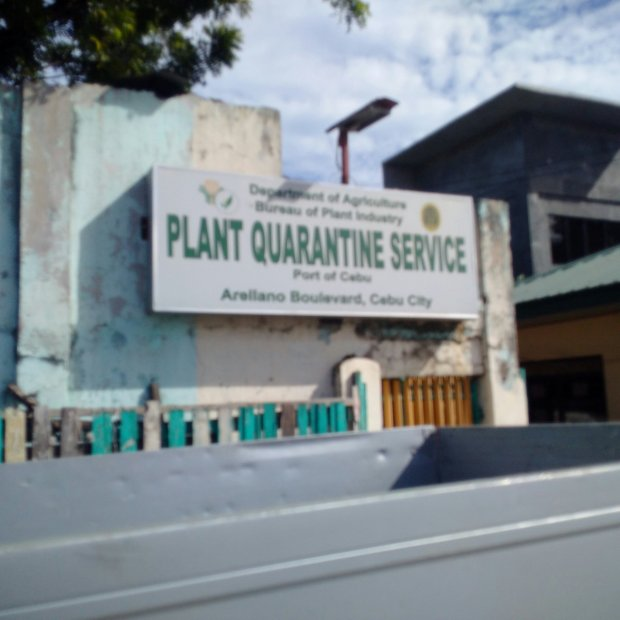 Plant Quarantine Services Port of Cebu